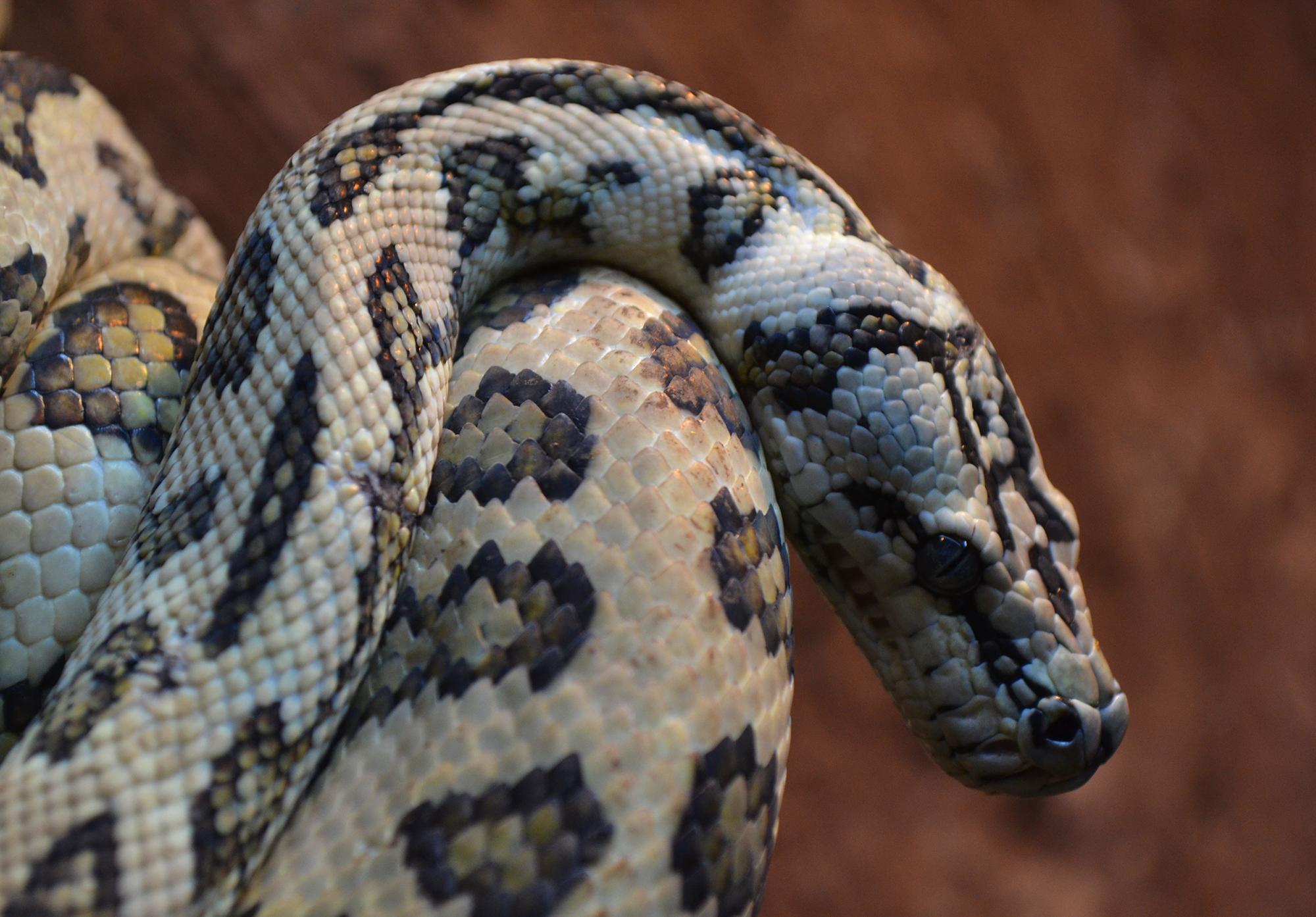 sentidos de las serpientes