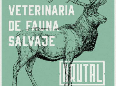 WORKSHOP 11: VETERINARIA DE FAUNA SALVAJE – SEVILLA