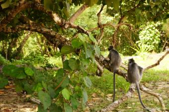 Malasia, el conflicto por el último territorio Natural – de María Marcos Vicente