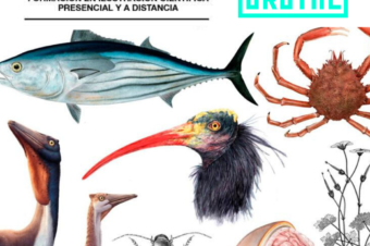 COLABORACIÓN CON ILLUSTRACIENCIA