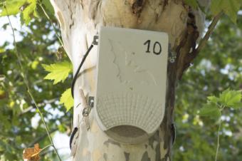 Insecticidas naturales: murciélagos y vencejos