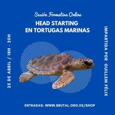 """""""HEAD STARTING  EN TORTUGAS MARINAS"""" – Sesión Formativa Online"""