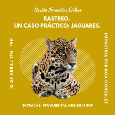 """""""RASTREO.  UN CASO PRÁCTICO: JAGUARES""""- Sesión Formativa Online"""