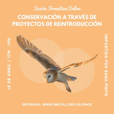 """""""CONSERVACIÓN A TRAVÉS DE PROYECTOS DE REINTRODUCCIÓN"""" – Sesión Formativa Online"""