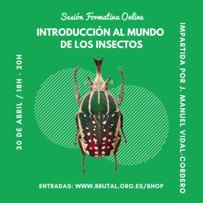 """""""INTRODUCCIÓN AL MUNDO DE LOS INSECTOS"""" – Sesión Formativa Online"""